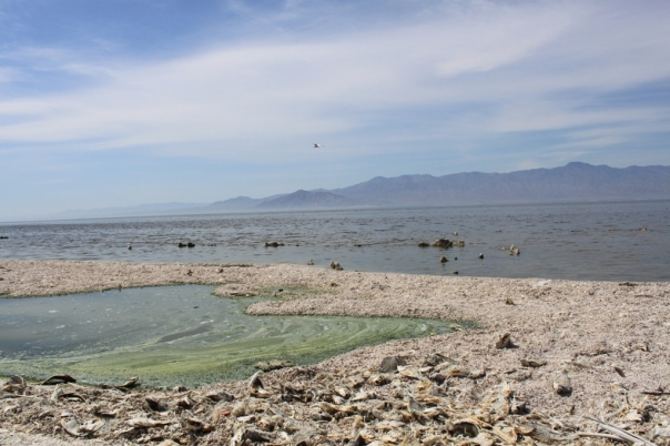 Salton-Sea-Rec-Area-Mar-2012-5