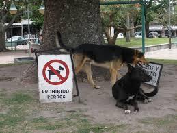 prohibidoperros
